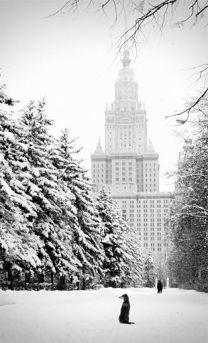 New York Winter 5