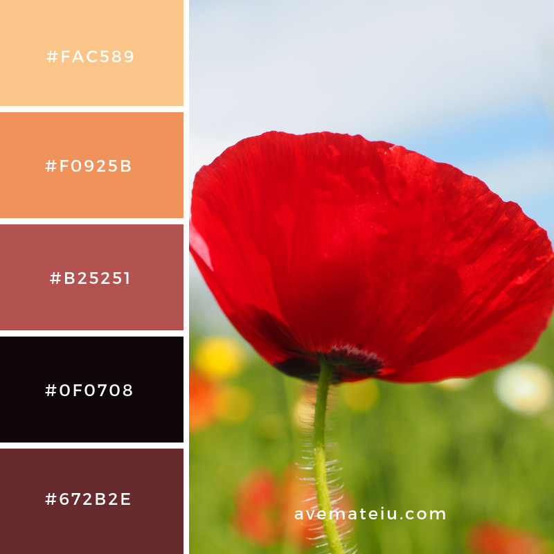 New Color Pallete on avemateiu.com: Color Palette 19 🎨 • • • #avemateiucolors #avemateiu #love #design #photos #designinspiration #designer #graphicdesign #colorinspiration #colors #instaphoto #colorpalette #moodboard #creative #instaart #colorgrading #brandidentity #artistsoninstagram #artwork #inspirationoftheday #fineart #branding #succes #beautiful #instadaily #bestoftheday #photooftheday #inspirational #colorful #avemateiudesign