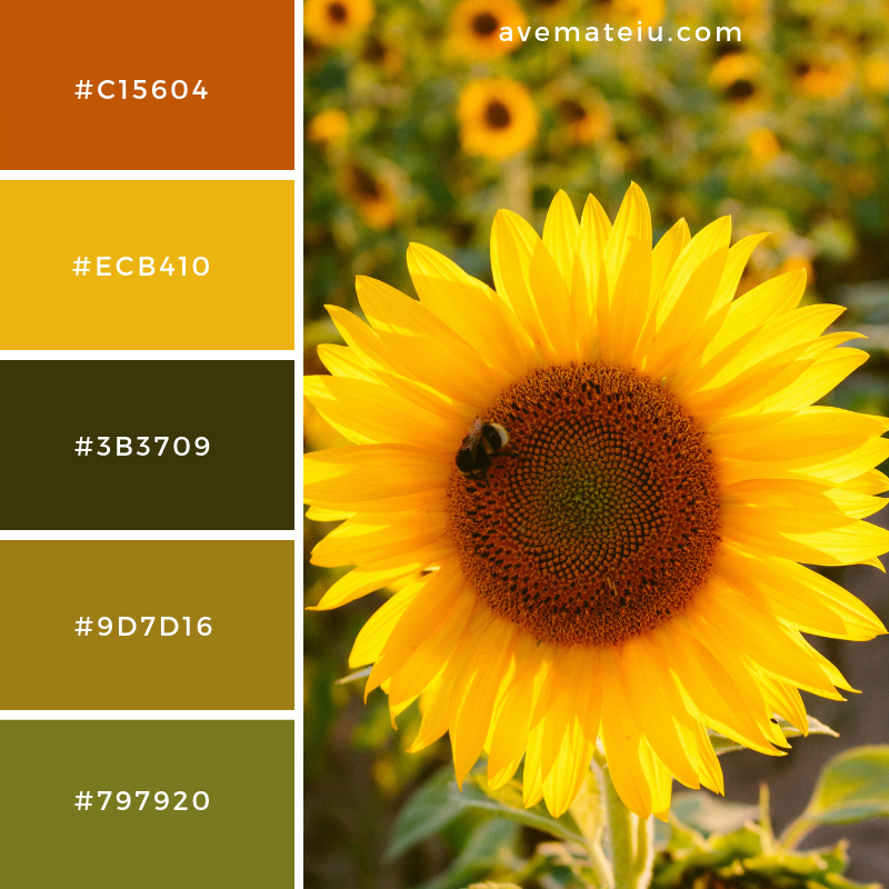 New Color Pallete on avemateiu.com: Color Palette 23 🎨 • • • #avemateiucolors #avemateiu #love #design #photos #designinspiration #designer #graphicdesign #colorinspiration #colors #instaphoto #colorpalette #moodboard #creative #instaart #colorgrading #brandidentity #artistsoninstagram #artwork #inspirationoftheday #fineart #branding #succes #beautiful #instadaily #bestoftheday #photooftheday #inspirational #colorful #avemateiudesign