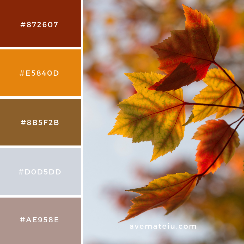 New Color Pallete on avemateiu.com: Color Palette 35 🎨 • • • #avemateiucolors #avemateiu #love #design #photos #designinspiration #designer #graphicdesign #colorinspiration #colors #instaphoto #colorpalette #moodboard #creative #instaart #colorgrading #brandidentity #artistsoninstagram #artwork #inspirationoftheday #fineart #branding #succes #beautiful #instadaily #bestoftheday #photooftheday #inspirational #colorful #avemateiudesign