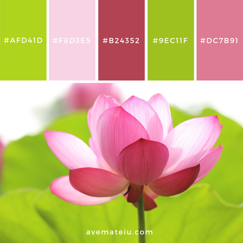 New Color Pallete on avemateiu.com: Color Palette 36 🎨 • • • #avemateiucolors #avemateiu #love #design #photos #designinspiration #designer #graphicdesign #colorinspiration #colors #instaphoto #colorpalette #moodboard #creative #instaart #colorgrading #brandidentity #artistsoninstagram #artwork #inspirationoftheday #fineart #branding #succes #beautiful #instadaily #bestoftheday #photooftheday #inspirational #colorful #avemateiudesign