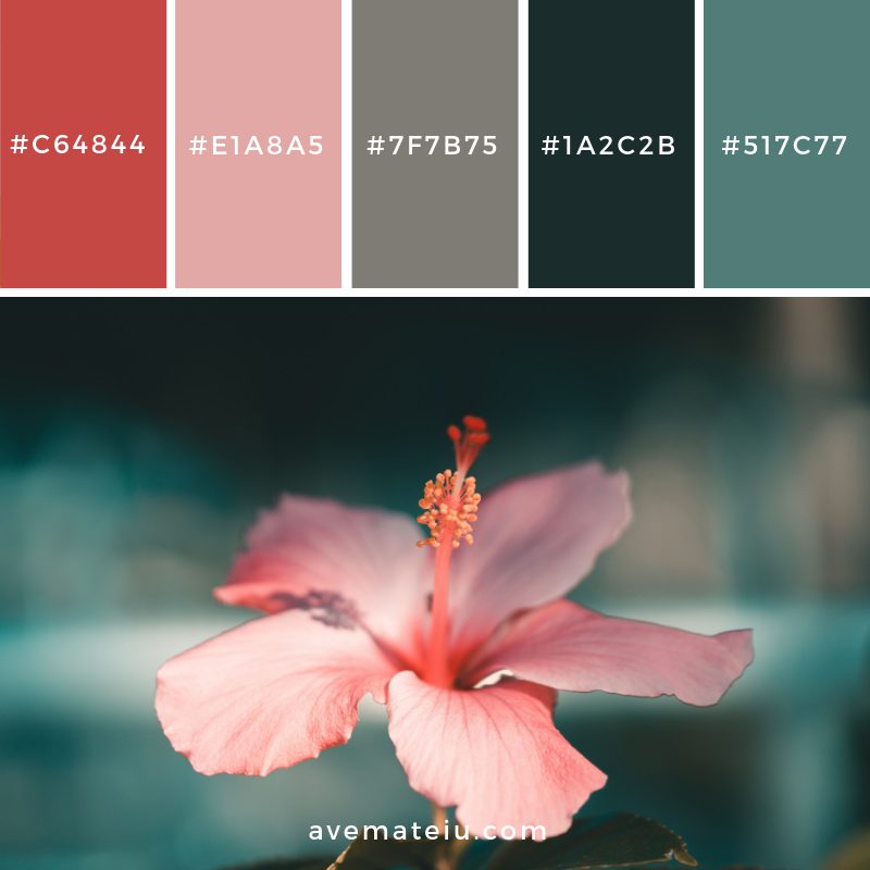 New Color Pallete on avemateiu.com: Color Palette 48 🎨 • • • #avemateiucolors #avemateiu #love #design #photos #designinspiration #designer #graphicdesign #colorinspiration #colors #instaphoto #colorpalette #moodboard #creative #instaart #colorgrading #brandidentity #artistsoninstagram #artwork #inspirationoftheday #fineart #branding #succes #beautiful #instadaily #bestoftheday #photooftheday #inspirational #colorful #avemateiudesign