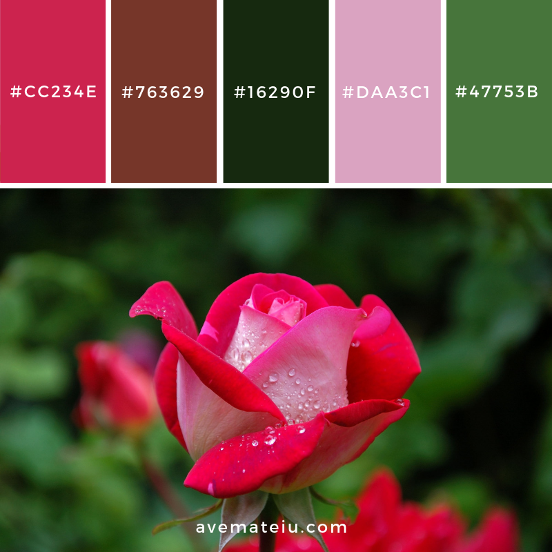 New Color Pallete on avemateiu.com: Color Palette 72 🎨 • • • #avemateiucolors #avemateiu #love #design #photos #designinspiration #designer #graphicdesign #colorinspiration #colors #instaphoto #colorpalette #moodboard #creative #instaart #colorgrading #brandidentity #artistsoninstagram #artwork #inspirationoftheday #fineart #branding #succes #beautiful #instadaily #bestoftheday #photooftheday #inspirational #colorful #avemateiudesign