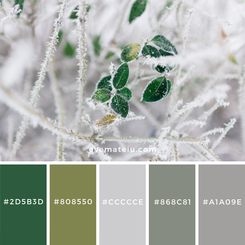 New Color Pallete on avemateiu.com: Color Palette 118 🎨 • • • #avemateiucolors #avemateiu #love #design #photos #designinspiration #designer #graphicdesign #colorinspiration #colors #instaphoto #colorpalette #moodboard #creative #instaart #colorgrading #brandidentity #artistsoninstagram #artwork #inspirationoftheday #fineart #branding #succes #beautiful #instadaily #bestoftheday #photooftheday #inspirational #colorful #avemateiudesign