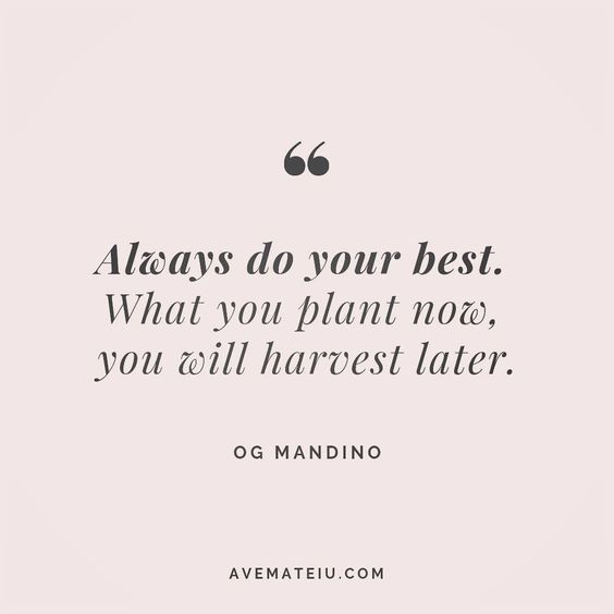 Always do your best. What you plant now, you will harvest later. Og Mandino Quote 140 😏😎🔝•••#quote #quotes #quoteoftheday #qotd #motivation #inspiration #instaquotes #quotesgram #quotestags #motivational #inspo #motivationalquotes #inspirational #inspirationalquotes #inspirationoftheday #positive #life #succes #blogger #successquotes #confidence #happy #beautiful #lyrics #instadaily #bestoftheday #quotes #lovequotes #goodvibes