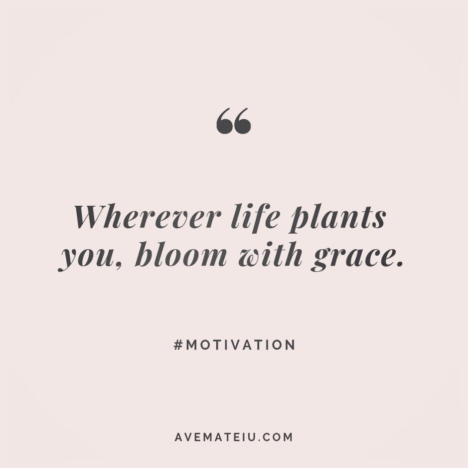 Wherever life plants you, bloom with grace. Quote 247 😏😎 More quotes on avemateiu.com/quotes 🔝 • • • #MotivationalQuoteOfTheDay #beautifulwords #deepquotes #happinessquotes #inspirationalquotes #leadershipquote #lifequotes #motivationalquotes #positivequotes #successquotes #wisdomquotes #goalsetter #successmindset #inspirationdaily #inspirationalquoteoftheday #selfdetermination #successfulday #motivation #confidence #instadaily #bestoftheday #goodvibes #quoteoftheday