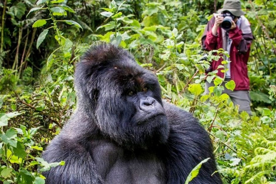 Gorilla Trekking, Bwindi Impenetrable Forest, Uganda - travel destinations, africa destinations, travel tips, travel ideas, travel hacks, travel guide, road trip, adventure travel, bucket list, south africa