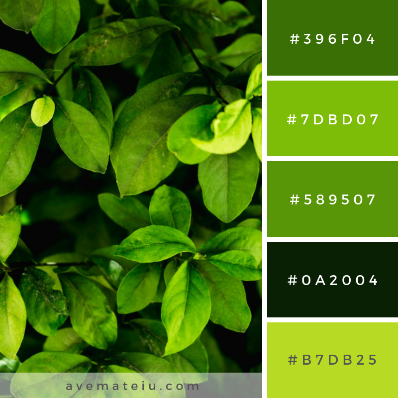 Group of tropical green leaves. Color Palette #221 - Color combination, Color pallets, Color palettes, Color scheme, Color inspiration, Colour Palettes, Art, Inspiration, Vintage, Bright, Blue, Warm, Dark, Design, Yellow, Green, Grey, Red, Purple, Rustic, Fall, Autumn, Winter, Spring 2019, Nature, Spring, Summer, Flowers, Sunset, Sunrise, Pantone https://avemateiu.com/color-palettes/