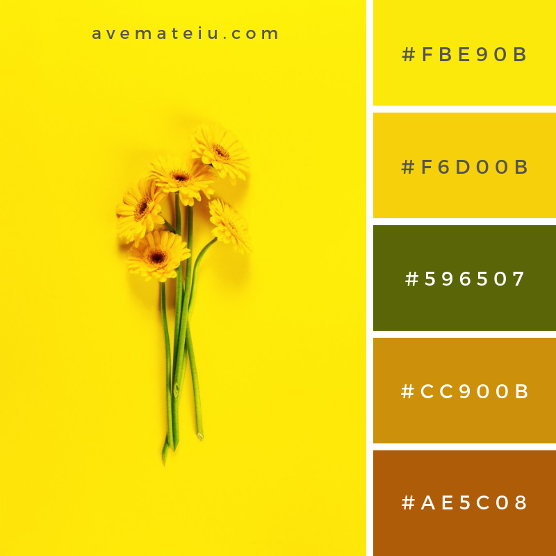 Sun plant beauty floral above. Color Palette #229 - Color combination, Color pallets, Color palettes, Color scheme, Color inspiration, Colour Palettes, Abstract, Design, Background, Flower, Floral, Summer, Green, Floral background, Nature, Green background, Art, Color, Gerbera