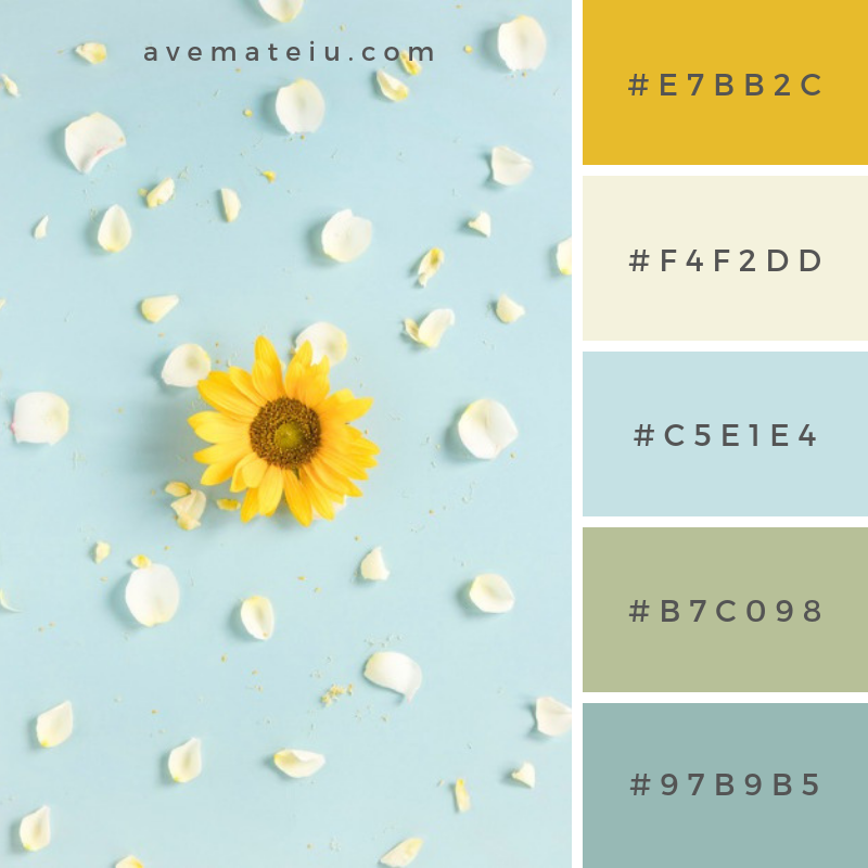 Yellow sunflower surrounded with white petals on blue surface. Color Palette #241 - Color combination, Color pallets, Color palettes, Color scheme, Color inspiration, Colour Palettes, Art, Inspiration, Vintage, Bright, Blue, Warm, Dark, Design, Yellow, Green, Grey, Red, Purple, Rustic, Fall, Autumn, Winter, Spring 2019, Nature, Spring, Summer, Flowers, Sunset, Sunrise, Pantone https://avemateiu.com/color-palettes/