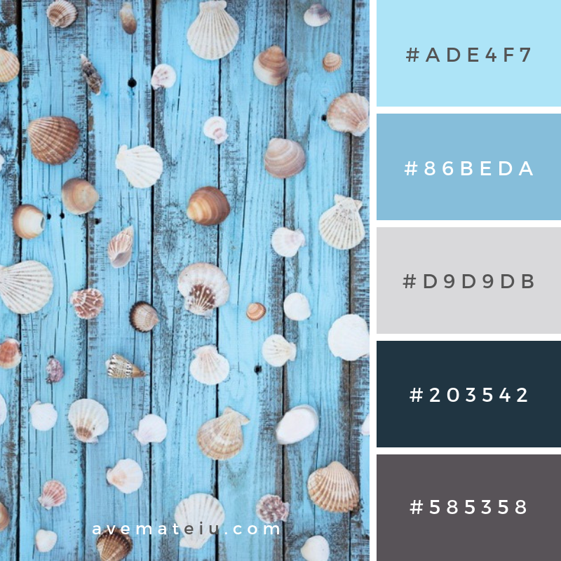 Flat lay seashells on wooden board Color Palette #249 - Color combination, Color pallets, Color palettes, Color scheme, Color inspiration, Colour Palettes, Art, Inspiration, Vintage, Bright, Blue, Warm, Dark, Design, Yellow, Green, Grey, Red, Purple, Rustic, Fall, Autumn, Winter, Summer 2019, Nature, Spring, Summer, Flowers, Sunset, Sunrise, Pantone https://avemateiu.com/color-palettes/