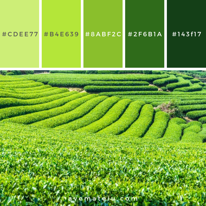 Tea fields Color Palette #296 - Color combination, Color pallets, Color palettes, Color scheme, Color inspiration, Colour Palettes, Art, Inspiration, Vintage, Bright, Blue, Warm, Dark, Design, Yellow, Green, Grey, Red, Purple, Rustic, Fall, Autumn, Winter, Summer 2019, Nature, Spring, Summer, Flowers, Sunset, Sunrise, Pantone https://avemateiu.com/color-palettes/