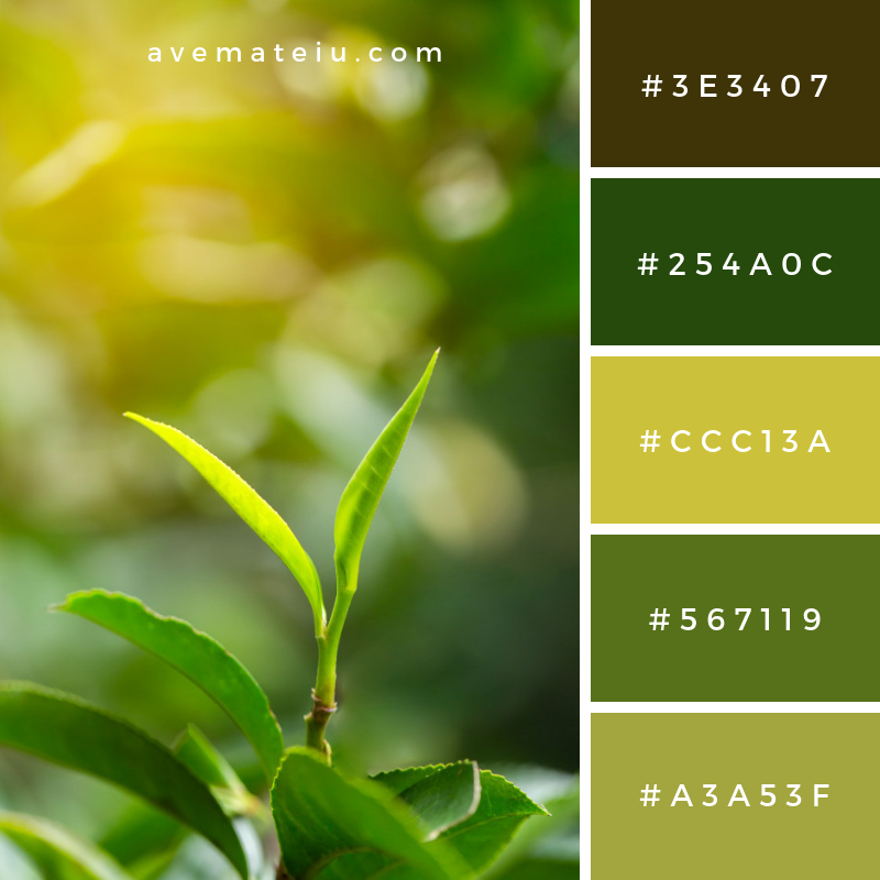 Closeup fresh green tea leaves Color Palette #297 - Color combination, Color pallets, Color palettes, Color scheme, Color inspiration, Colour Palettes, Art, Inspiration, Vintage, Bright, Blue, Warm, Dark, Design, Yellow, Green, Grey, Red, Purple, Rustic, Fall, Autumn, Winter, Summer 2019, Nature, Spring, Summer, Flowers, Sunset, Sunrise, Pantone https://avemateiu.com/color-palettes/