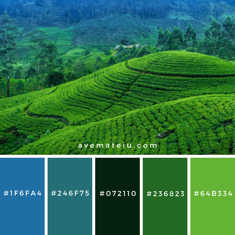 Tea estate in Sri Lanka Color Palette #298 - Color combination, Color pallets, Color palettes, Color scheme, Color inspiration, Colour Palettes, Art, Inspiration, Vintage, Bright, Blue, Warm, Dark, Design, Yellow, Green, Grey, Red, Purple, Rustic, Fall, Autumn, Winter, Summer 2019, Nature, Spring, Summer, Flowers, Sunset, Sunrise, Pantone https://avemateiu.com/color-palettes/