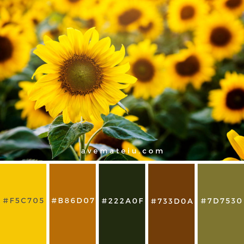 Beautiful blossom sunflowers in the field Color Palette #306 - Color combination, Color pallets, Color palettes, Color scheme, Color inspiration, Colour Palettes, Art, Inspiration, Vintage, Bright, Blue, Warm, Dark, Design, Yellow, Green, Grey, Red, Purple, Rustic, Fall, Autumn, Winter, Summer 2019, Nature, Spring, Summer, Flowers, Sunset, Sunrise, Pantone https://avemateiu.com/color-palettes/