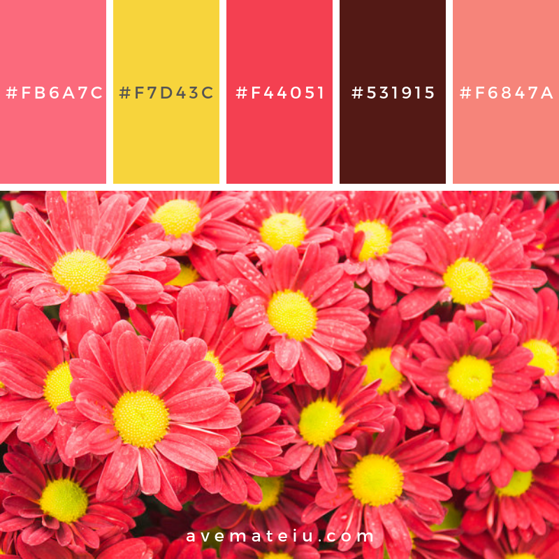 Colorful red chrysanthemum flower Color Palette #312 - Color combination, Color pallets, Color palettes, Color scheme, Color inspiration, Colour Palettes, Art, Inspiration, Vintage, Bright, Blue, Warm, Dark, Design, Yellow, Green, Grey, Red, Purple, Rustic, Fall, Autumn, Winter, Summer 2019, Nature, Spring, Summer, Flowers, Sunset, Sunrise, Pantone https://avemateiu.com/color-palettes/
