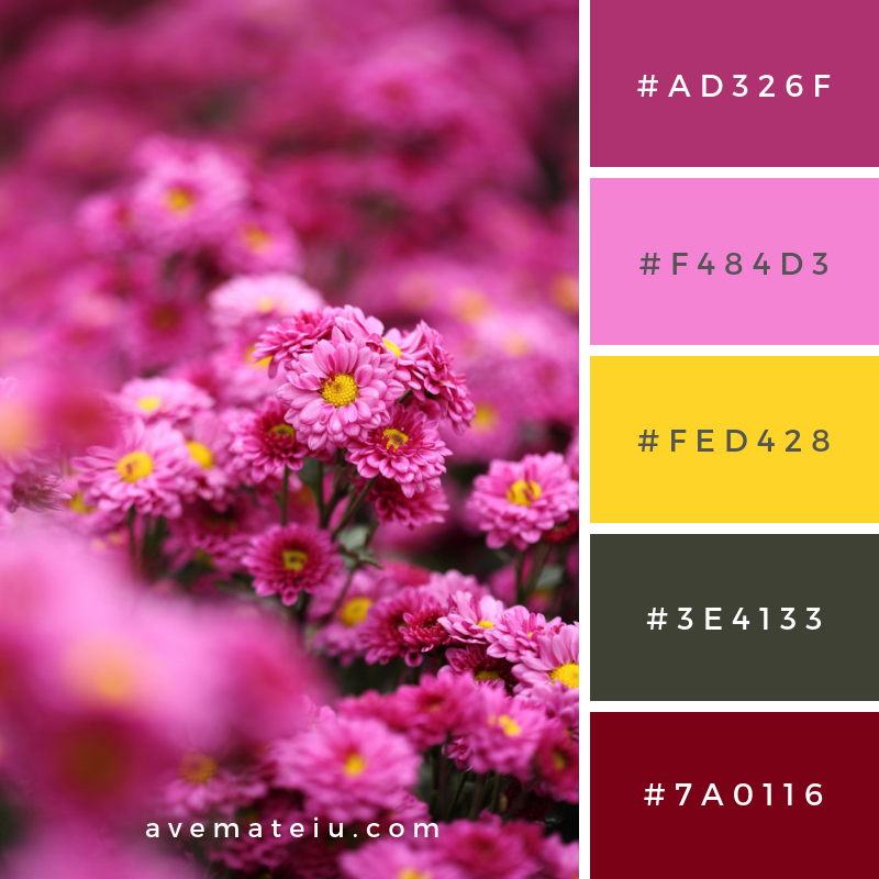 Beautiful chrysanthemum flower blooming Color Palette #313 - Color combination, Color pallets, Color palettes, Color scheme, Color inspiration, Colour Palettes, Art, Inspiration, Vintage, Bright, Blue, Warm, Dark, Design, Yellow, Green, Grey, Red, Purple, Rustic, Fall, Autumn, Winter, Summer 2019, Nature, Spring, Summer, Flowers, Sunset, Sunrise, Pantone https://avemateiu.com/color-palettes/