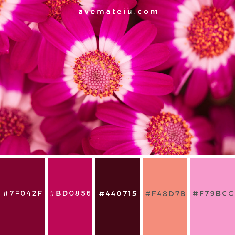 Beautiful fresh purple blossoms Color Palette #314 - Color combination, Color pallets, Color palettes, Color scheme, Color inspiration, Colour Palettes, Art, Inspiration, Vintage, Bright, Blue, Warm, Dark, Design, Yellow, Green, Grey, Red, Purple, Rustic, Fall, Autumn, Winter, Summer 2019, Nature, Spring, Summer, Flowers, Sunset, Sunrise, Pantone https://avemateiu.com/color-palettes/