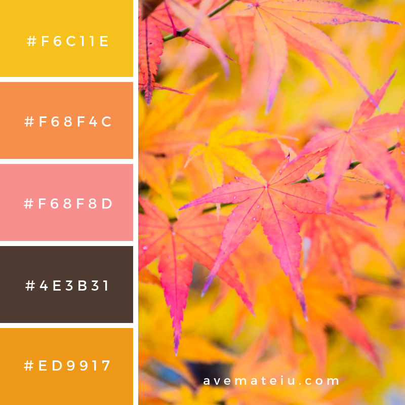 Maple leaf Color Palette #315 - Color combination, Color pallets, Color palettes, Color scheme, Color inspiration, Colour Palettes, Art, Inspiration, Vintage, Bright, Blue, Warm, Dark, Design, Yellow, Green, Grey, Red, Purple, Rustic, Fall, Autumn, Winter, Summer 2019, Nature, Spring, Summer, Flowers, Sunset, Sunrise, Pantone https://avemateiu.com/color-palettes/