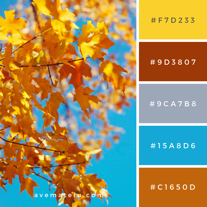 Maple Tree in Fall Color Color Palette #321 - Color combination, Color pallets, Color palettes, Color scheme, Color inspiration, Colour Palettes, Art, Inspiration, Vintage, Bright, Blue, Warm, Dark, Design, Yellow, Green, Grey, Red, Purple, Rustic, Fall, Autumn, Winter, Summer 2019, Nature, Spring, Summer, Flowers, Sunset, Sunrise, Pantone https://avemateiu.com/color-palettes/