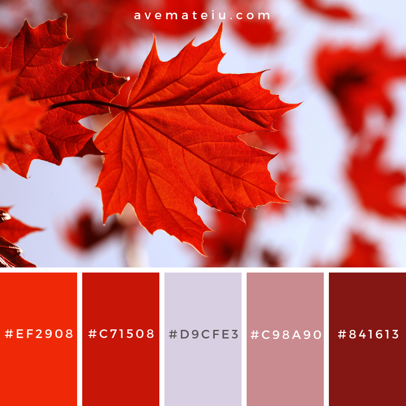Autumn leaves Color Palette #322 - Color combination, Color pallets, Color palettes, Color scheme, Color inspiration, Colour Palettes, Art, Inspiration, Vintage, Bright, Blue, Warm, Dark, Design, Yellow, Green, Grey, Red, Purple, Rustic, Fall, Autumn, Winter, Summer 2019, Nature, Spring, Summer, Flowers, Sunset, Sunrise, Pantone https://avemateiu.com/color-palettes/