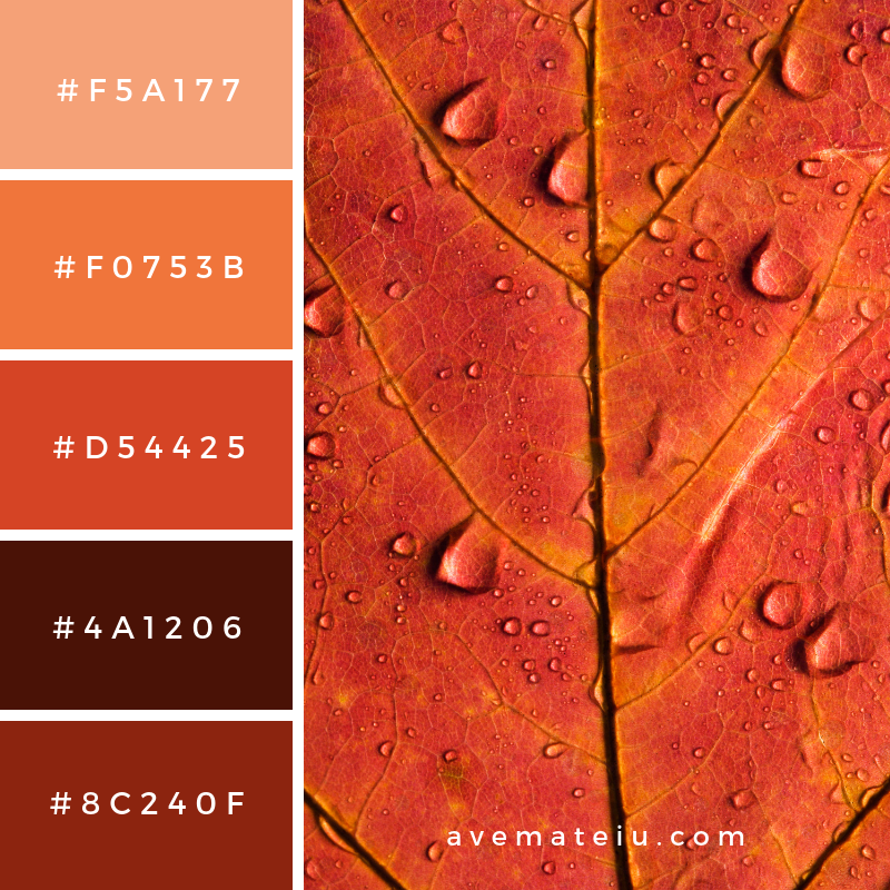 Maple Leaf Close up Color Palette #327 - Color combination, Color pallets, Color palettes, Color scheme, Color inspiration, Colour Palettes, Art, Inspiration, Vintage, Bright, Blue, Warm, Dark, Design, Yellow, Green, Grey, Red, Purple, Rustic, Fall, Autumn, Winter, Summer 2019, Nature, Spring, Summer, Flowers, Sunset, Sunrise, Pantone https://avemateiu.com/color-palettes/
