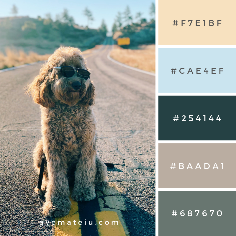 Camping, mountains, hiking, man's best friend, dog, mountain road, beautiful, labradoodle, mountain Color Palette #337 - Color combination, Color pallets, Color palettes, Color scheme, Color inspiration, Colour Palettes, Art, Inspiration, Vintage, Bright, Blue, Warm, Dark, Design, Yellow, Green, Grey, Red, Purple, Rustic, Fall, Autumn, Winter, Autumn 2019, Nature, Spring, Summer, Flowers, Sunset, Sunrise, Pantone https://avemateiu.com/color-palettes/