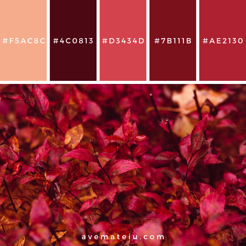Red Leaf Plant Color Palette #348 - Color combination, Color pallets, Color palettes, Color scheme, Color inspiration, Colour Palettes, Art, Inspiration, Vintage, Bright, Blue, Warm, Dark, Design, Yellow, Green, Grey, Red, Purple, Rustic, Fall, Autumn, Winter, Autumn 2019, Nature, Spring, Summer, Flowers, Sunset, Sunrise