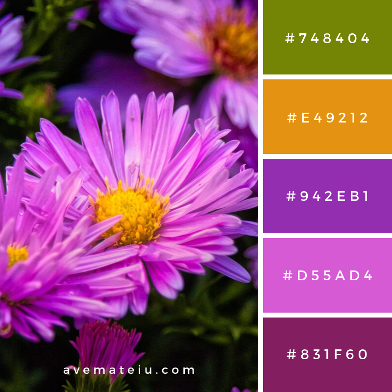 Purple Flowers Blooming Color Palette 349 - Color combination, Color pallets, Color palettes, Color scheme, Color inspiration, Colour Palettes, Art, Inspiration, Vintage, Bright, Blue, Warm, Dark, Design, Yellow, Green, Grey, Red, Purple, Rustic, Fall, Autumn, Winter, Autumn 2019, Nature, Spring, Summer, Flowers, Sunset, Sunrise