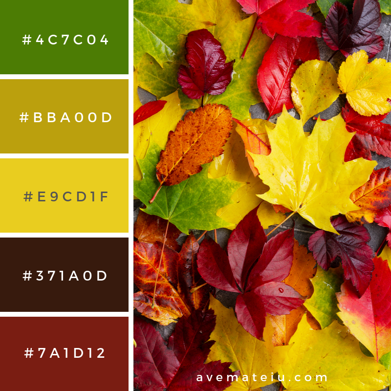 Natural fall leaves on gray stone background Color Palette 351 - Color combination, Color pallets, Color palettes, Color scheme, Color inspiration, Colour Palettes, Art, Inspiration, Vintage, Bright, Background, Warm, Dark, Design, Yellow, Green, Orange, Red, Purple, Rustic, Fall, Autumn, Thanksgiving, Autumn 2019, Nature, Seasonal, Wood, Wooden, Season, Natural