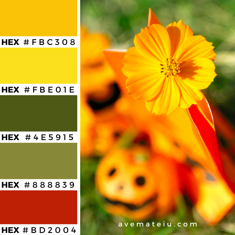 Orange flower close up Color Palette 355 - Color combination, Color pallets, Color palettes, Color scheme, Color inspiration, Colour Palettes, Art, Inspiration, Vintage, Bright, Background, Warm, Dark, Design, Yellow, Green, Orange, Red, Purple, Rustic, Fall, Autumn, Thanksgiving, Autumn 2019, Nature, Seasonal, Wood, Wooden, Season, Natural
