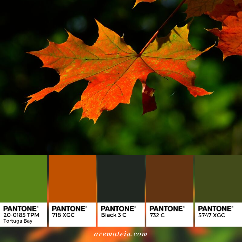 Autumn Leaves Pantone Color Palette #346 - Color combination, Color pallets, Color palettes, Color scheme, Color inspiration, Colour Palettes, Art, Inspiration, Vintage, Bright, Blue, Warm, Dark, Design, Yellow, Green, Grey, Red, Purple, Rustic, Fall, Autumn, Winter, Autumn 2019, Nature, Spring, Summer, Flowers, Sunset, Sunrise