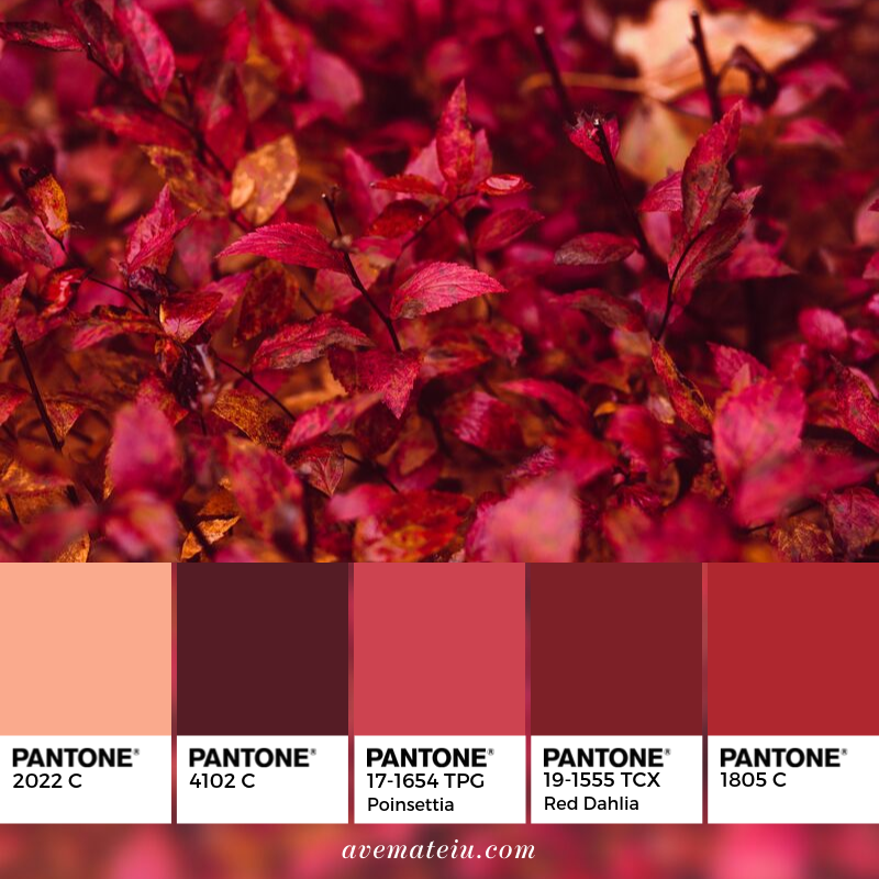 Red Leaf Plant Color Palette 348 Ave Mateiu,Meghan Markle And Prince Harry Santa Barbara Home