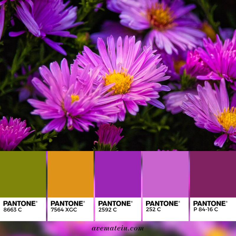 Purple Flowers Blooming Pantone Color Palette 349 - Color combination, Color pallets, Color palettes, Color scheme, Color inspiration, Colour Palettes, Art, Inspiration, Vintage, Bright, Blue, Warm, Dark, Design, Yellow, Green, Grey, Red, Purple, Rustic, Fall, Autumn, Winter, Autumn 2019, Nature, Spring, Summer, Flowers, Sunset, Sunrise