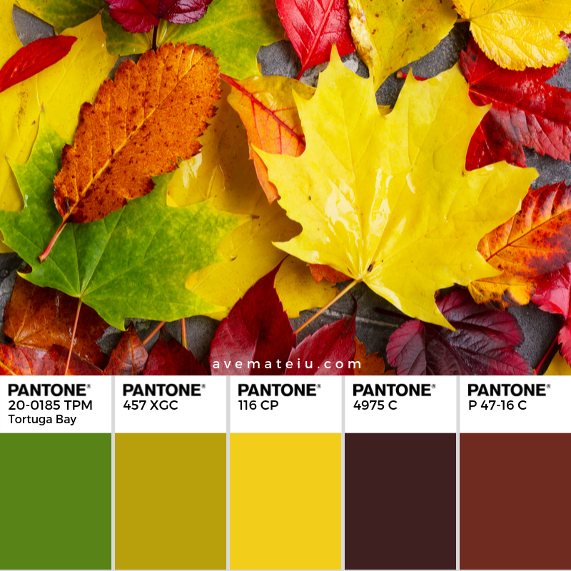 Natural fall leaves on gray stone background Pantone Color Palette 351 - Color combination, Color pallets, Color palettes, Color scheme, Color inspiration, Colour Palettes, Art, Inspiration, Vintage, Bright, Background, Warm, Dark, Design, Yellow, Green, Orange, Red, Purple, Rustic, Fall, Autumn, Thanksgiving, Autumn 2019, Nature, Seasonal, Wood, Wooden, Season, Natural