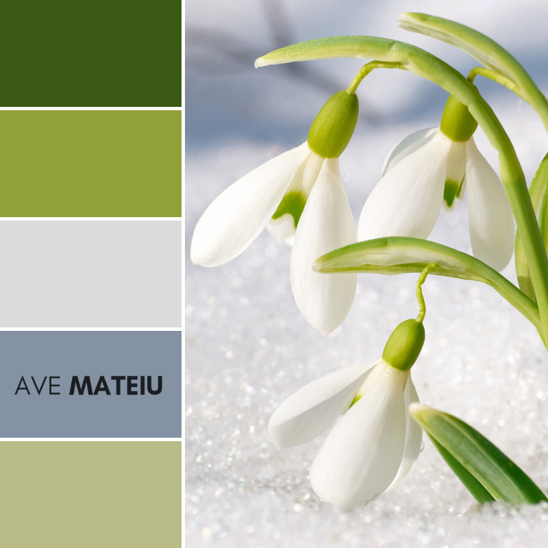 Spring snowdrop flowers Color Palette 367 - Spring 2020, color palette, color palettes, colour Palettes, color scheme, color inspiration, color combination, art tutorial, collage, digital art, canvas painting, wall art, home painting, photography, weddings by color, inspiration, vintage, wallpaper, background, rustic, seasonal, season, natural, nature