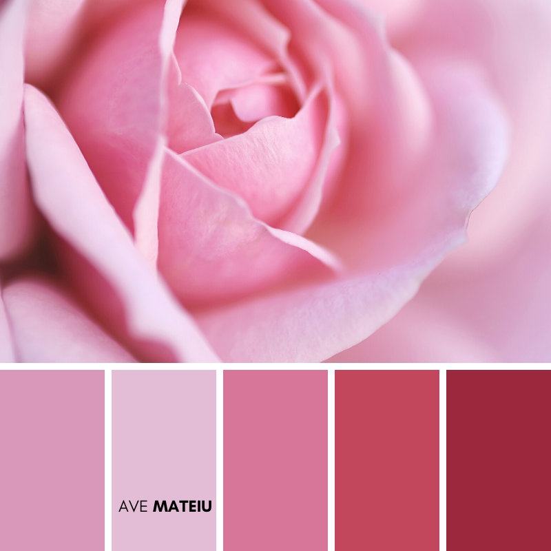 Pink Rose Close up Color Palette 370 - Spring 2020, color palette, color palettes, colour palettes, color scheme, color inspiration, color combination, art tutorial, collage, digital art, canvas painting, wall art, home painting, photography, weddings by color, inspiration, vintage, wallpaper, background, rustic, seasonal, season, natural, nature
