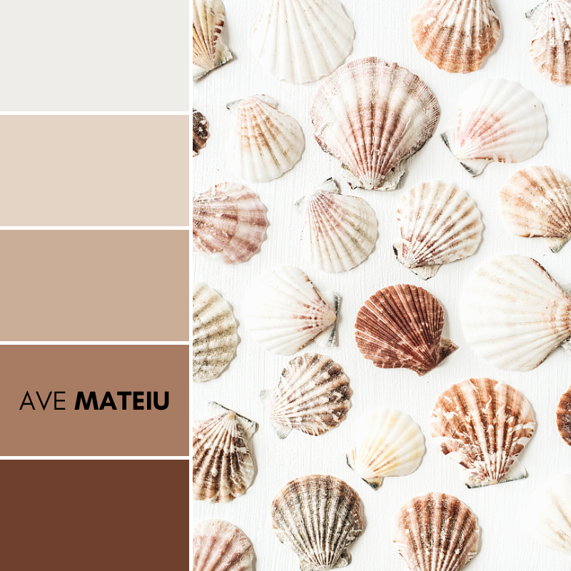 Sea shells pattern on white background. Flat lay, top view minimal texture Color Palette 375 - Summer 2020, color palette, color palettes, colour palettes, color scheme, color inspiration, color combination, art tutorial, collage, digital art, canvas painting, wall art, home painting, photography, weddings by color, inspiration, vintage, wallpaper, background, rustic, seasonal, season, natural, nature
