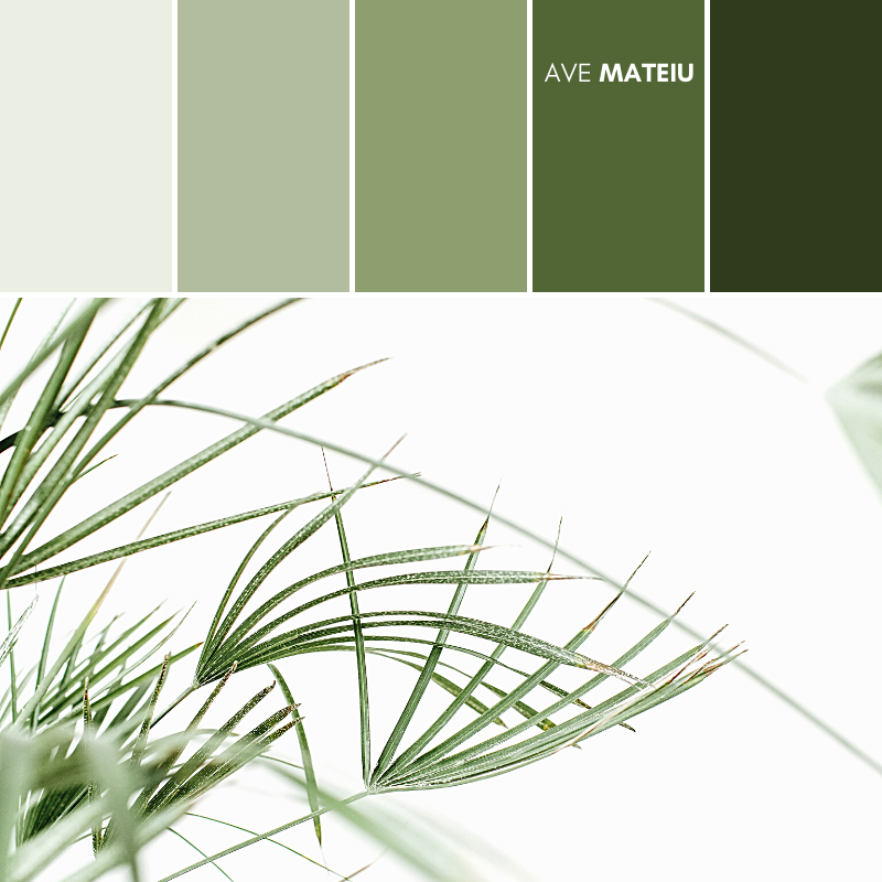 Tropical palm leaves on white background minimal lifestyle concept Color Palette #376 - Summer 2020, color palette, color palettes, colour palettes, color scheme, color inspiration, color combination, art tutorial, collage, digital art, canvas painting, wall art, home painting, photography, weddings by color, inspiration, vintage, wallpaper, background, rustic, seasonal, season, natural, nature