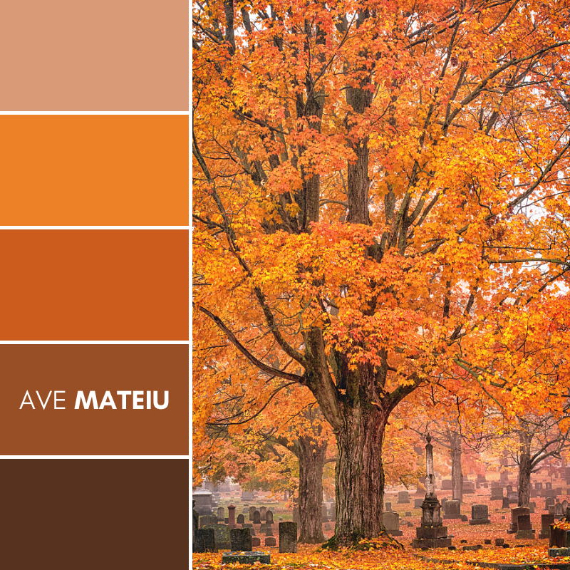 Gorgeous fall colors accent the cemetary Color Palette #387 - Fall Autumn 2020, color palette, color palettes, colour palettes, color scheme, color inspiration, color combination, art tutorial, collage, digital art, canvas painting, wall art, home painting, photography, weddings by color, inspiration, vintage, wallpaper, background, rustic, seasonal, season, natural, nature