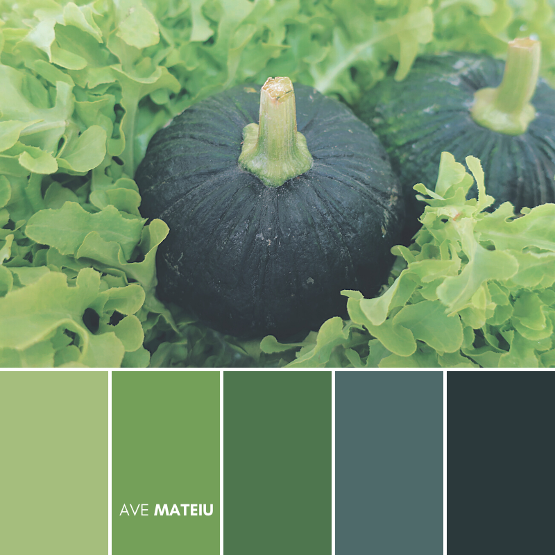 Dark green pumpkin with lettuce vegetable surrounding Color Palette #390 - Fall Autumn 2020, color palette, color palettes, colour palettes, color scheme, color inspiration, color combination, art tutorial, collage, digital art, canvas painting, wall art, home painting, photography, weddings by color, inspiration, vintage, wallpaper, background, rustic, seasonal, season, natural, nature