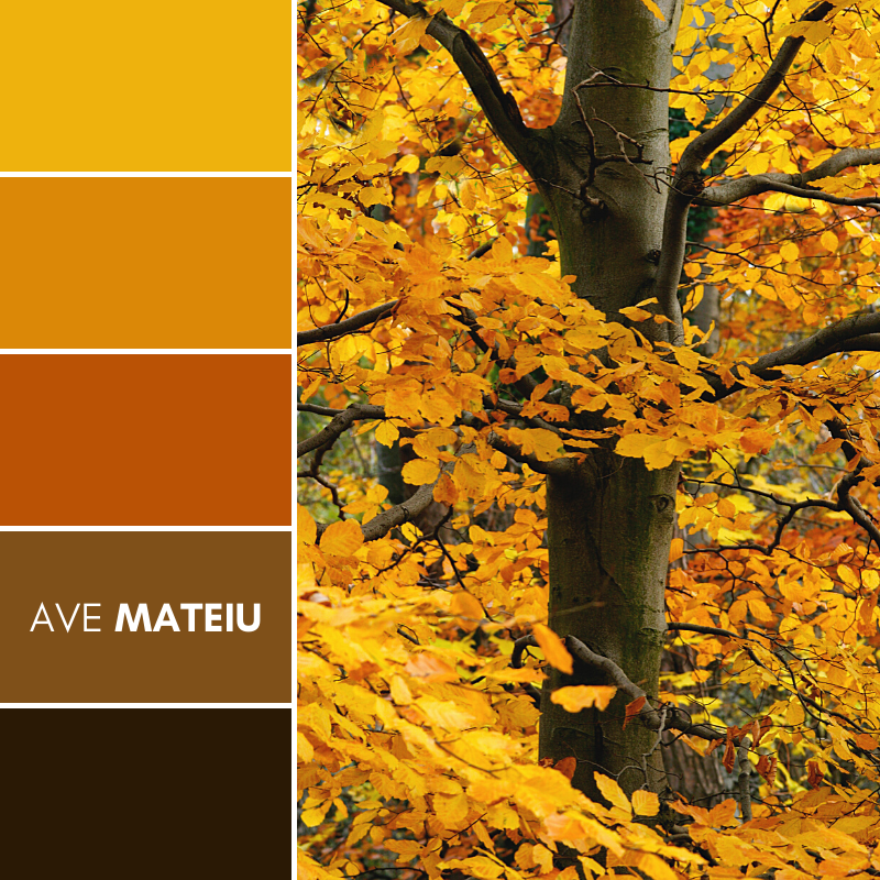 Autumn tree with golden leaves Color Palette #391 - Fall Autumn 2020, color palette, color palettes, colour palettes, color scheme, color inspiration, color combination, art tutorial, collage, digital art, canvas painting, wall art, home painting, photography, weddings by color, inspiration, vintage, wallpaper, background, rustic, seasonal, season, natural, nature